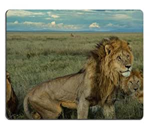 Nature National Geographic Lions Wild Mouse Pads Customized Made to Order Support Ready 9 7/8 Inch (250mm) X 7 7/8 Inch (200mm) X 1/16 Inch (2mm) High Quality Eco Friendly Cloth with Neoprene Rubber MSD Mouse Pad Desktop Mousepad Laptop Mousepads Comfortable Computer Mouse Mat Cute Gaming Mouse pad
