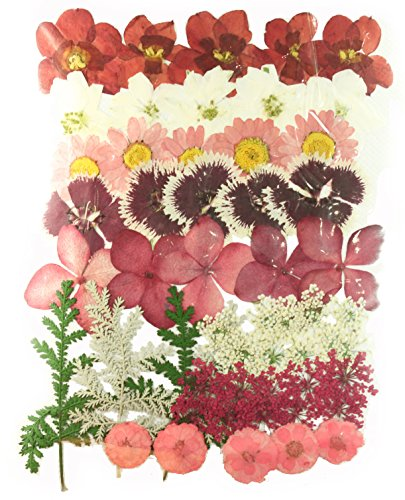 Pressed flowers mixed pack, daffodils, larkspur, marguerite, hydrangea, carnation, lace flowers, chrysanthemum, (Pressed Flowers)