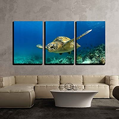 Green Sea Turtle In Deep Ocean - 3 Panel Canvas Art