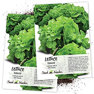 Seed Needs, Oakleaf Lettuce (Lactuca Sativa) Twin Pack of 400 Seeds Each Non-GMO : Garden & Outdoor