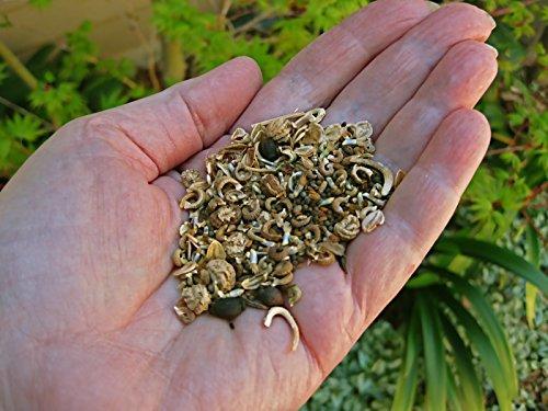 Northeast Wildflower Seeds, No Filler, High Germination (1 Lb.)