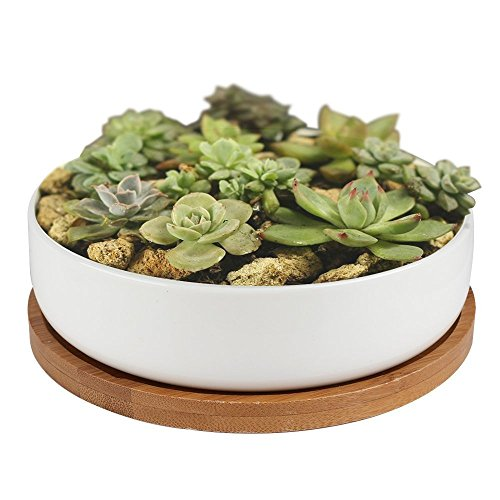 Succulent Planter Ceramic with Bamboo Tray,Y&M(TM) 6 inch Modern White Ceramic Round Design for Succulent Planter Cactus Pots Decorative Flower Holder Bowl Basin,Tub - Succulent Planter Tray