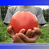 Heirloom Pink OXHEART Tomato Organic Seeds, Professional Pack, 100 Seeds / Pack, Old Fashioned Heritage Variety Vegetable