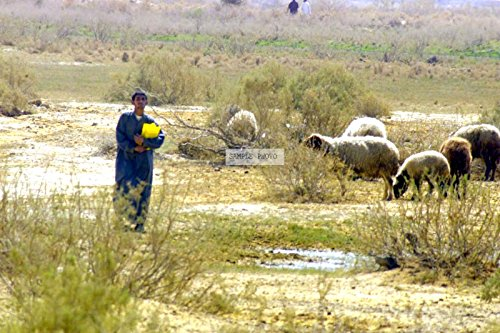 Photo An Iraqi man watches over his flock in Al Fajr, Iraq, during Operation IRAQI FREEDOM, 03/28/2003