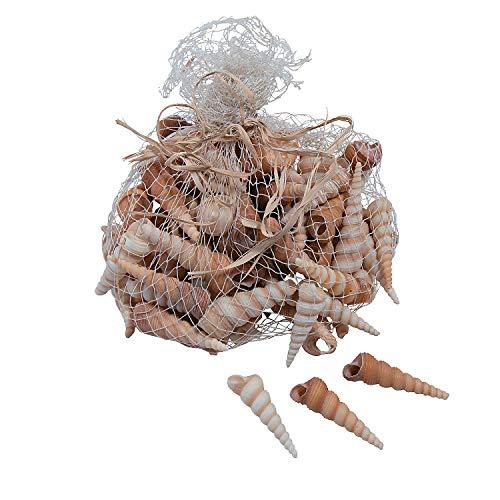 (Fun Express Natural Turritella Shells (70 Pieces) Bulk Craft Accessories)