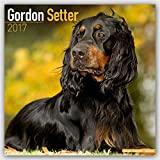 Gordon Setter Calendar 2017 - Dog Breed Calendars - 2016 - 2017 wall calendars - 16 Month by Avonside