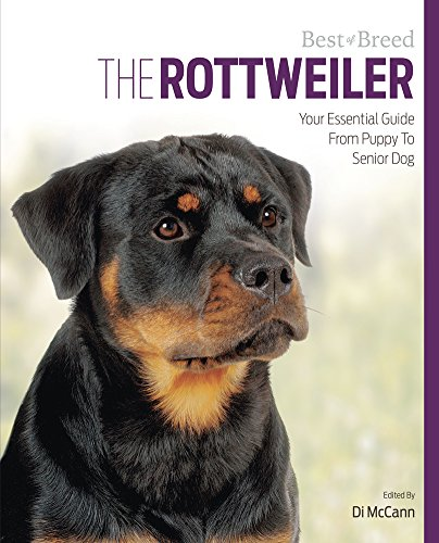 The Rottweiler: Your Essential Guide From Puppy