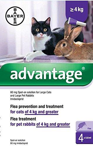Bayer Advantage 80 (Katzen Mehr Als 4 Kg)