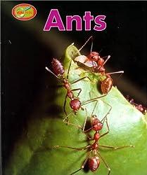 Ants Sb-Minipets