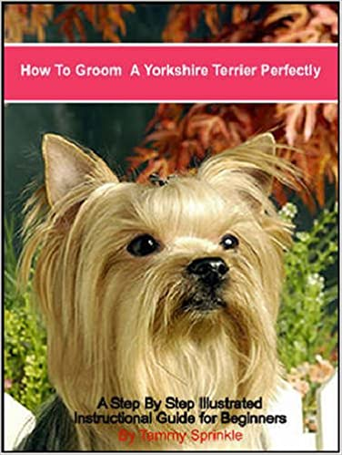 How To Groom A Yorkshire Terrier Perfectly A Step By Step