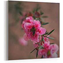 Westlake Art Canvas Print Wall Art - Flower Pink on Canvas Stretched Gallery Wrap - Modern Picture Photography Artwork - Ready to Hang - 16x16in (x7x-da5-763)