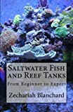 Saltwater Fish and Reef Tanks: From Beginner to Expert