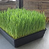 10-Pack 1020 Garden Growing Trays with Drain