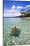 M Swiet Productions Premium Thick-Wrap Canvas Wall Art Print entitled Hawaii, Green Sea Turtle (Chelonia Mydas) An Endangered Species 32''x48''
