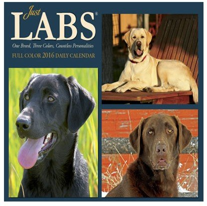 Just Labs - 2016 Boxed Calendar 6 x 5in