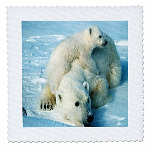 Playful Polar Bear (3dRose qs_98619_1 Playful Polar Bear N Her Mom.Jpg-Quilt Square, 10 by 10-Inch)