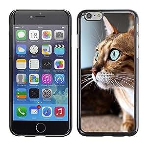 Be Good Phone Accessory // Dura Cáscara cubierta Protectora Caso Carcasa Funda de Protección para Apple Iphone 6 Plus 5.5 // Savannah Serengeti Blue Eyes Playing Cat