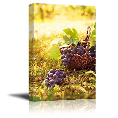 Canvas Prints Wall Art - Grapes Harvest in Vineyard with Basket of Grapes in Autumn | Modern Wall Decor/Home Decoration Stretched Gallery Canvas Wrap Giclee Print & Ready to Hang - 48