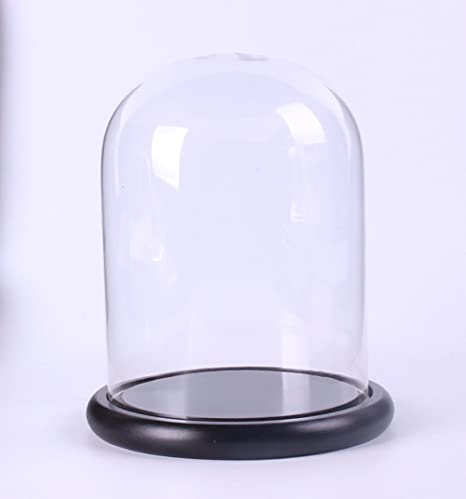 Glass Dome Cloche Display Bell Jar With Black Wooden Tray 12cmx16cm