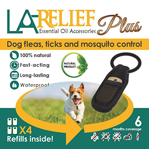 Best Natural Insect Repellent For Dogs