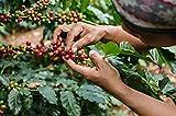Java Planet - Guatemalan USDA Gourment Organic Coffee Beans, Medium Roast, Shade Grown, Bird Friendly, Rainforest Alliance, Arabica Gourmet Specialty Grade A - packaged in 1 LB bag