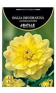 Bulbos - Dalia Decorativa amarillo puro - Batlle