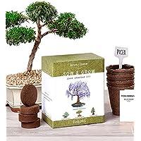 Nature's Blossom Bonsai Garden Seed Starter Kit - Easily...