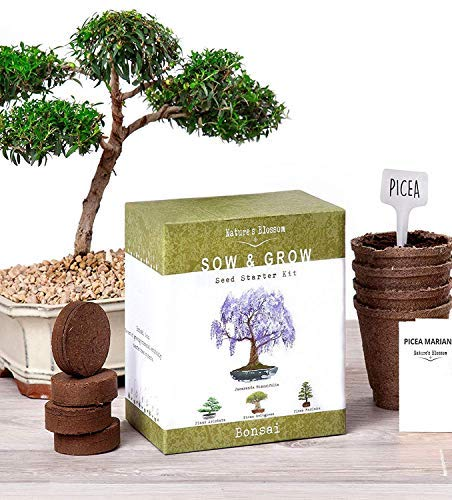 Nature's Blossom Bonsai Garden Seed Starter Kit - Easily Grow 4 Types of Miniature Trees Indoors: A Complete Gardening Set Organic Seeds, Soil, Planting Pots, Plant Labels & Growing Guide. -