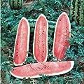 Watermelon, Jubilee , Heirloom, Organic 500 Seeds, Large, Sweet N Delicious