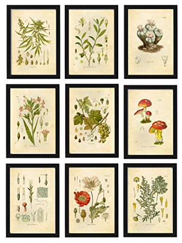 Ink Inc. Psychoactive Hallucinogenic Plants Botanical Drawings