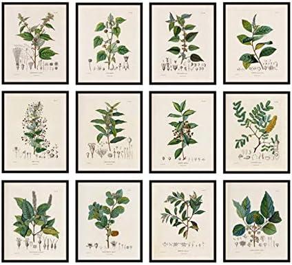 Antiguas ilustraciones de plantas francesas Carteles e impresiones vintage Estudios botánicos Arte de la pared Imágenes Pintura de la lona Decoración de la pared-30x40x12Pcscm Sin marco