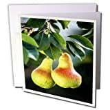3dRose TDSwhite – Farm and Food - Food Ripe Pears Tree - 12 Greeting Cards with Envelopes (gc_285171_2)
