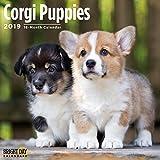 Corgi Puppies 2019 16 Month Wall Calendar 12 x 12 Inches