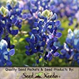 35 Seeds, Texas Bluebonnet (Lupinus texenis) Seeds By Seed Needs