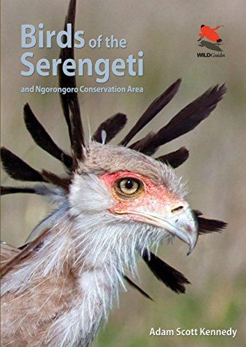 Birds of the Serengeti: And Ngorongoro Conservation Area (Wildlife Explorer Guides)