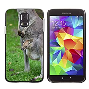 Etui Housse Coque de Protection Cover Rigide pour // M00112273 Canguro joven Animal Zoo Animal // Samsung Galaxy S5 S V SV i9600 (Not Fits S5 ACTIVE)