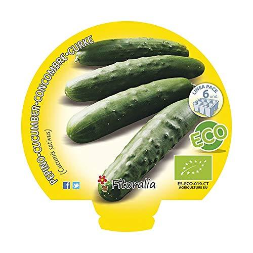 Plantel pepino ecológico (6 unidades): Amazon.es: Jardín