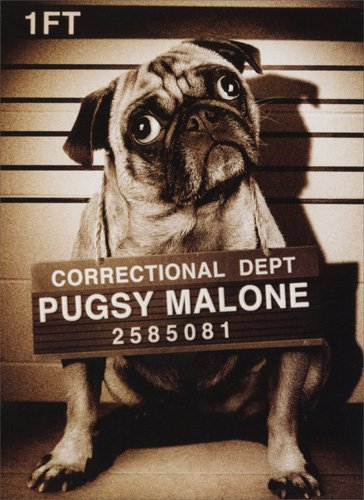 Amazon Pugsy Malone Funny Dog Birthday Card Office Products