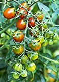 buy Moby Grape Tomato Seed now, new 2020-2019 bestseller, review and Photo, best price $6.99