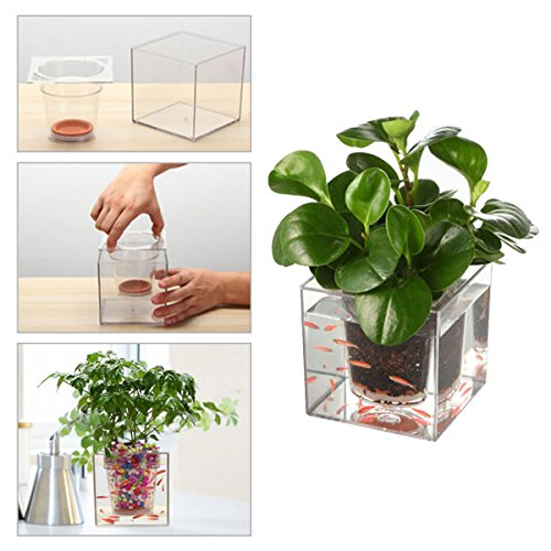 Pathonor Transparent Self watering Flowerpot DIY Educational product image