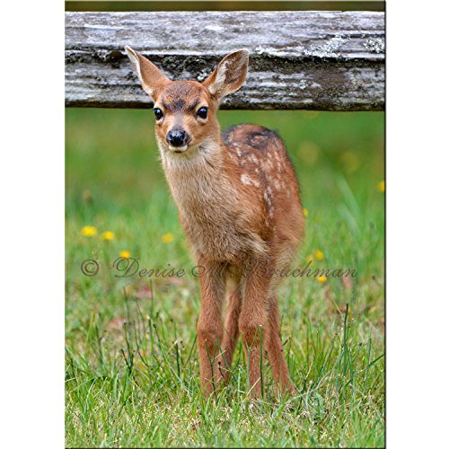 Spotted Baby Deer Photo - Spotted Fawn Photo - Photos Baby Animals - Photos Baby Deer - Nursery Art - Kids Room Art - Deer Photos by Denise Bruchman Photography