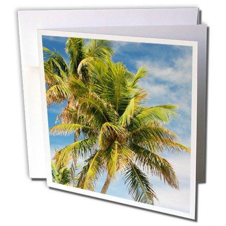 3dRose Greeting Cards, Coconut Palms, Bahia Honda Beach Sp, Florida Keys, Us10 Mpr0423, Maresa Pryor, Set of 6 (gc_89241_1)