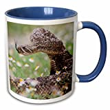 "3dRose mug_146695_6 ""Western Diamondback Rattlesnake Coiled To Strike US44 LDI0558 Larry Ditto"" Two Tone Blue Mug, 11 oz, Blue/White"