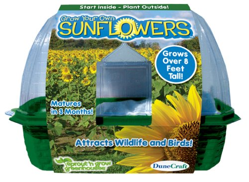DuneCraft Sprout 'n Grow Greenhouses Sunflowers