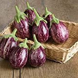 buy David's Garden Seeds Eggplant Calliope NW3527 (Purple) 25 Non-GMO, Hybrid Seeds now, new 2020-2019 bestseller, review and Photo, best price $8.95