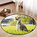 """Round Carpets,Alaskan Malamute,Klee Kai Puppy Sitting on Grass Looking Up Friendly Young Cute Animal,Anti-Slip Doormat Footpad Machine Washable,2'3"""" Multicolor 6"""