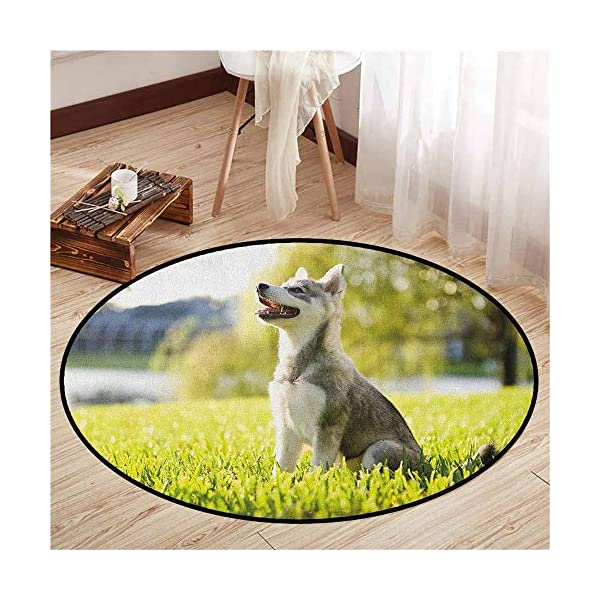 """Round Carpets,Alaskan Malamute,Klee Kai Puppy Sitting on Grass Looking Up Friendly Young Cute Animal,Anti-Slip Doormat Footpad Machine Washable,2'3"""" Multicolor 1"""