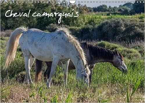 Calendrier Semi.Amazon Fr Cheval Camarguais La Beaute Du Cheval Semi