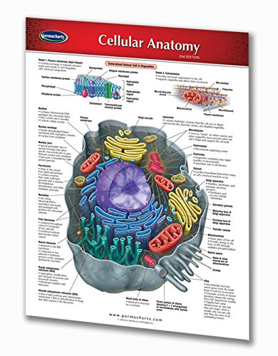 Cellular Anatomy Guide - 2-page, 8.5
