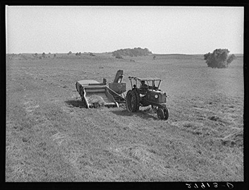 1939 Photo Harvesting timothy grass seed. Jasper County, Iowa Location: Iowa, Jasper County